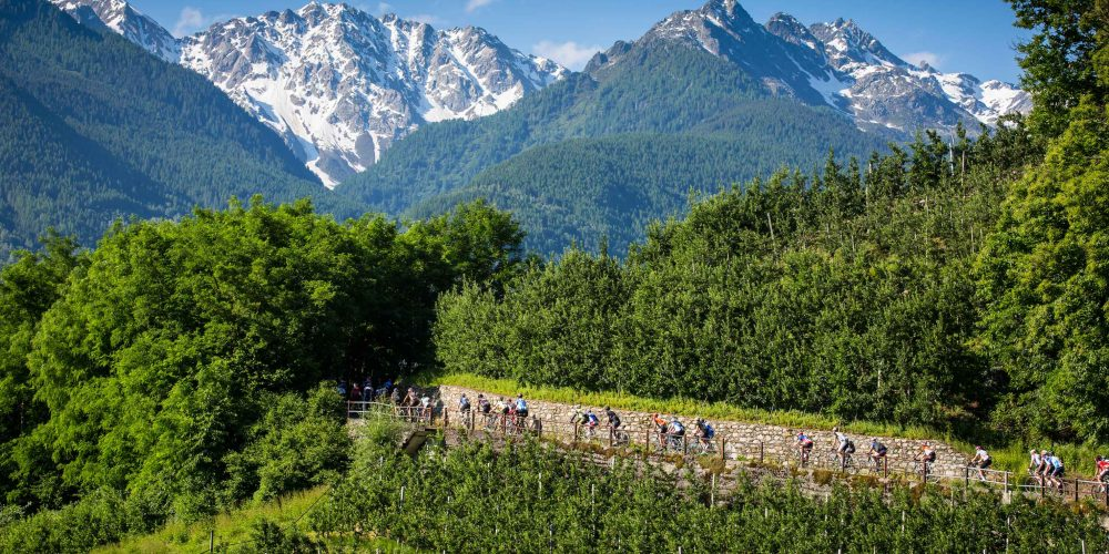 At the fifth Granfondo Stelvio Santini 100 additional numbers for wolf protection